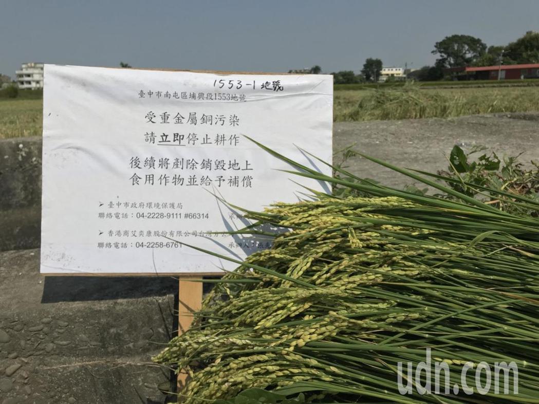 台中市南屯區2公頃農地遭重金屬汙染,現場已公告禁止耕作,已結穗的水稻被剷除銷毀。...