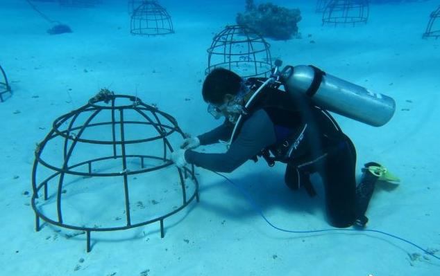 中國科學院南海海洋研究所在南海種植了約十萬平方公尺的珊瑚,2016年底播種珊瑚斷...