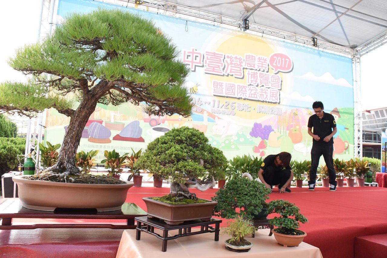 今年的中台灣農業博覽會還結合了國際盆栽展與雅石展。 記者凌筠婷/攝影