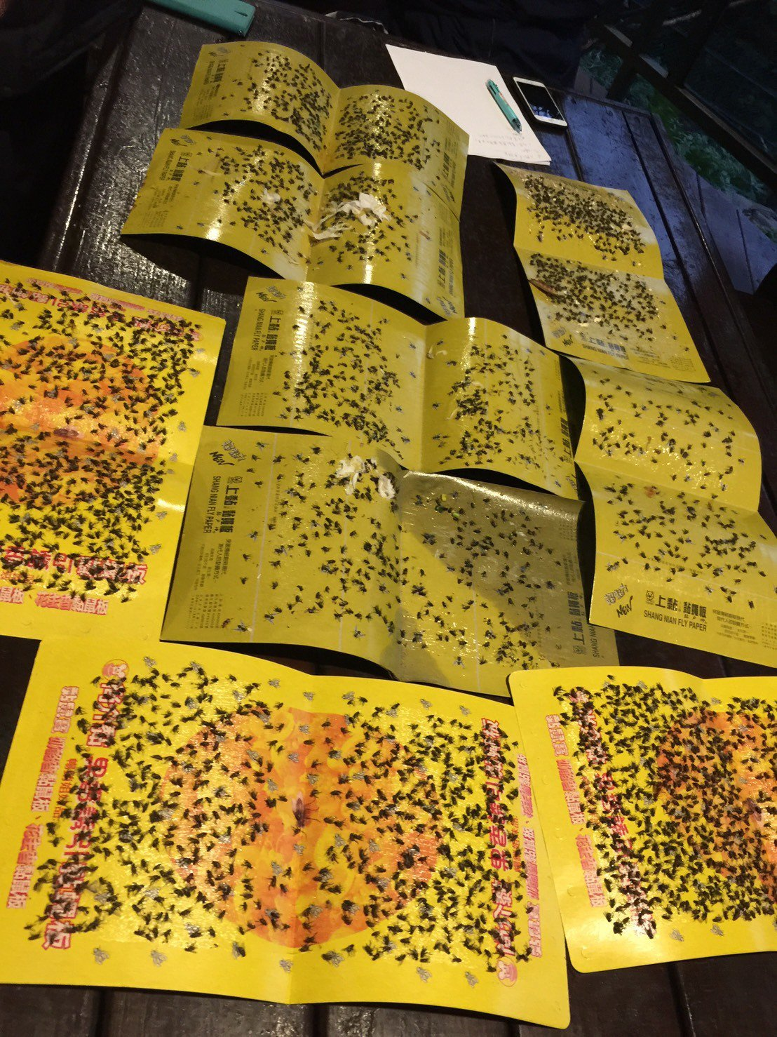 苗栗縣南庄鄉餐廳業者攤開黏蒼蠅紙,黑壓壓一片死蒼蠅,也透露無奈。圖/讀者提供