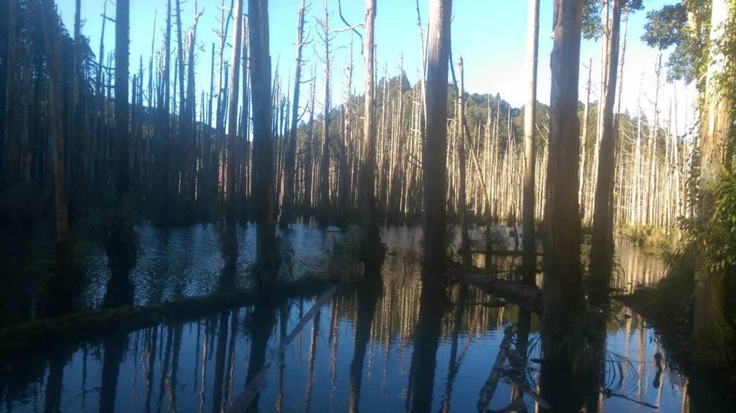 林務局一度想對意外頻傳的水漾森林封山,但民眾反映恐變成山老鼠天堂。 圖/讀者提供