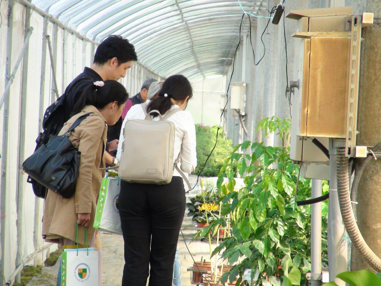 雲林縣虎尾、土庫地區進行太陽光電場域作物栽培試驗,成功種出高品質作物,昨天舉辦觀...