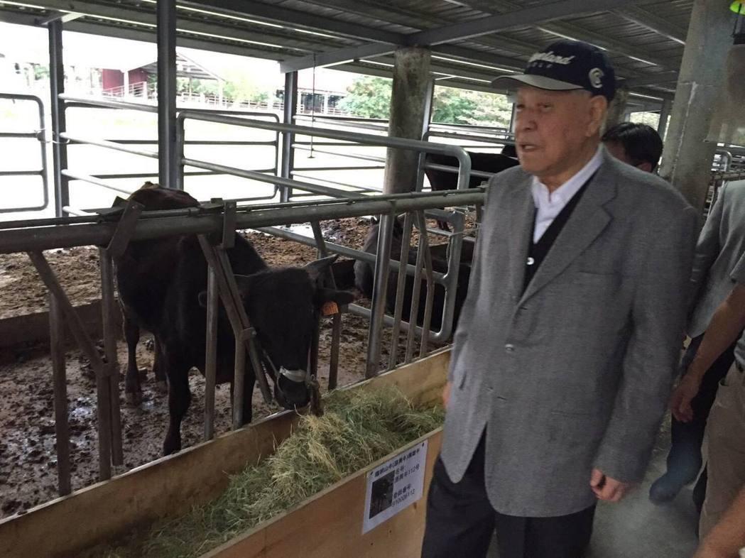 前總統李登輝在花蓮兆豐農場養牛,取名「源興牛」。圖/取自李登輝臉書