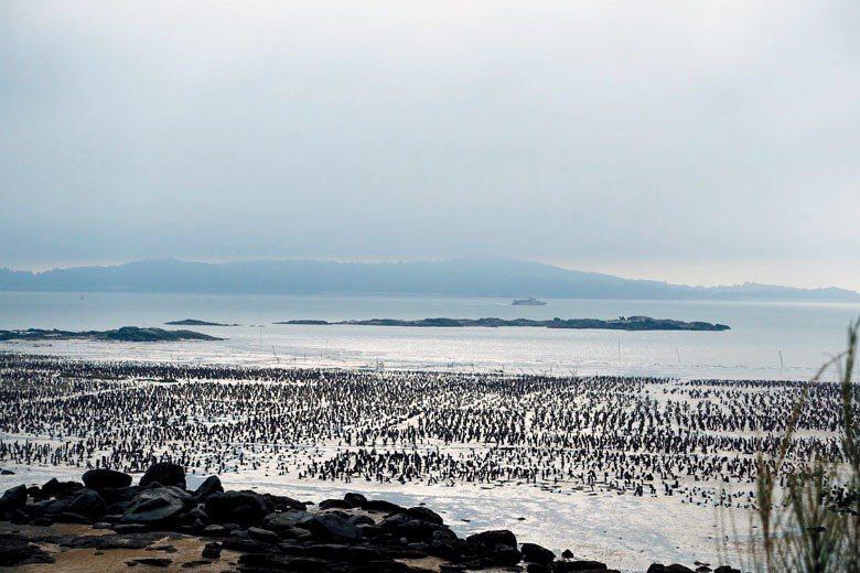 許多金門在地人早已開啟自己的新發展,尋回石蚵文化維持自然生態的旅行模式即為一例。 圖/聯合報系資料照