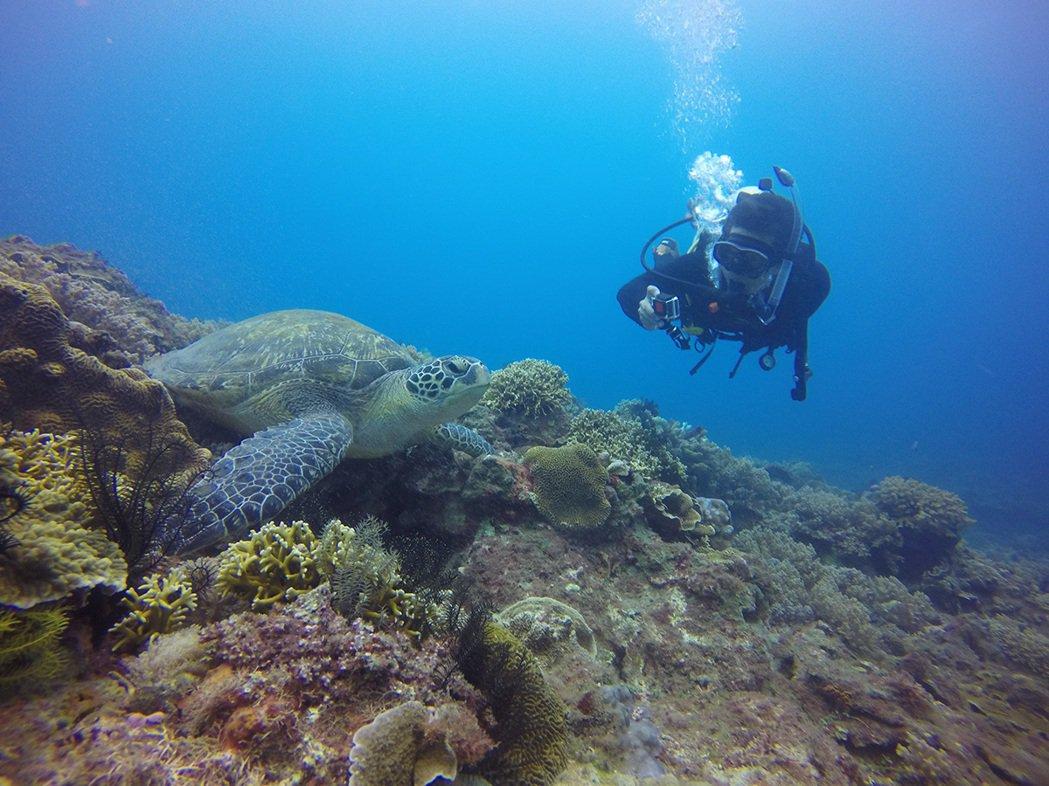 海龜悠游大海,正巧陽光灑下,美不勝收! 圖片提供|島人海洋文化工作室