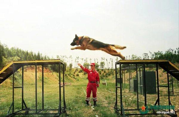 大陸搜救犬隊訓練情況。 圖/摘自中國軍網
