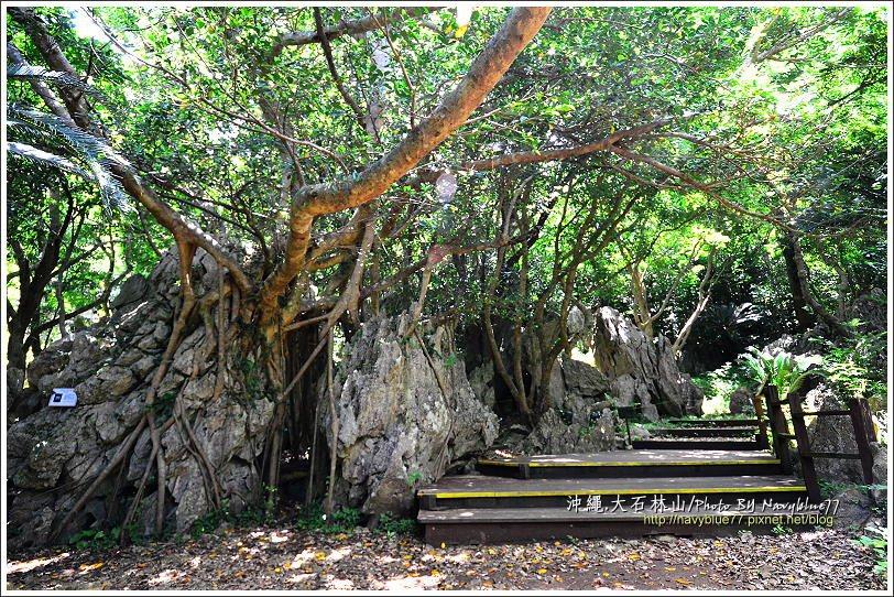 ↑榕樹也來參一腳,成為奇特的岩穴。