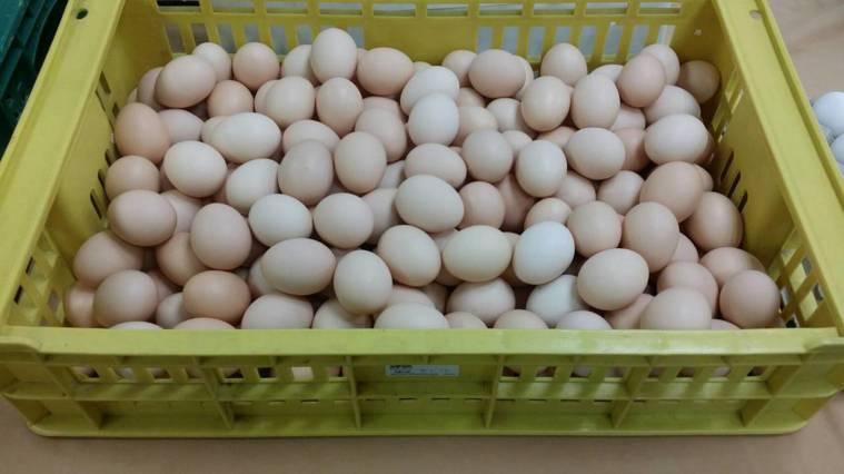一籃雞蛋。報社資料照片