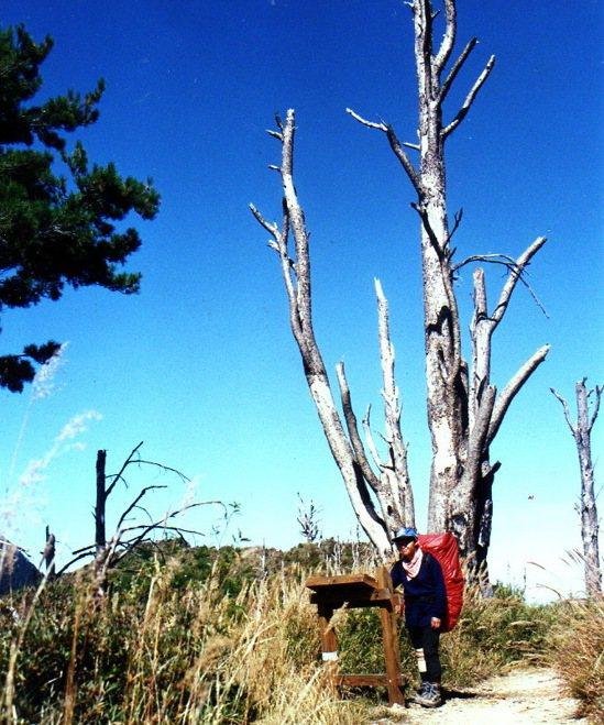 1992年八通關古道的解說牌後方是一顆枯死的鐵杉木,也是美麗景觀。 圖/翁秀嬋提...