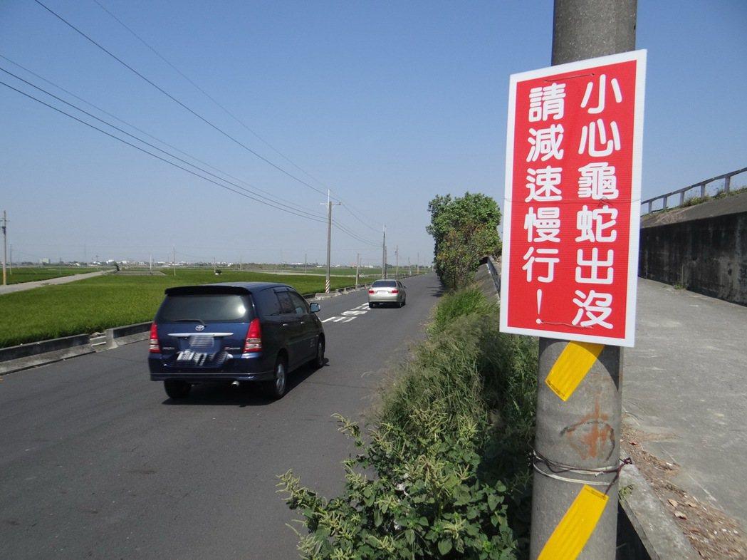 車流量增加的雲林北港溪防汛道,最近經常出現蛇與龜, 影響交通,路人設牌警告駕駛龜...