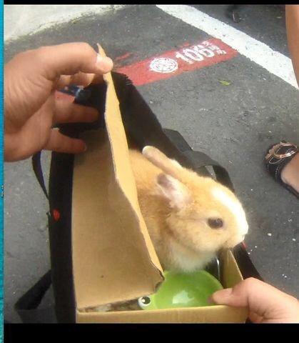 警方在李姓女通緝犯手提袋中找到這隻寵物兔。記者潘欣中/翻攝