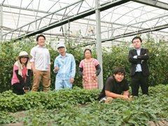 台新金農企票選/高食安蔬果 灌溉比照人體循環