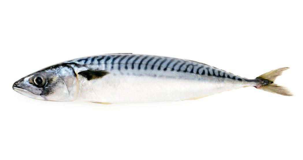 為什麼青背魚比白肉魚好呢? 圖/元氣周報