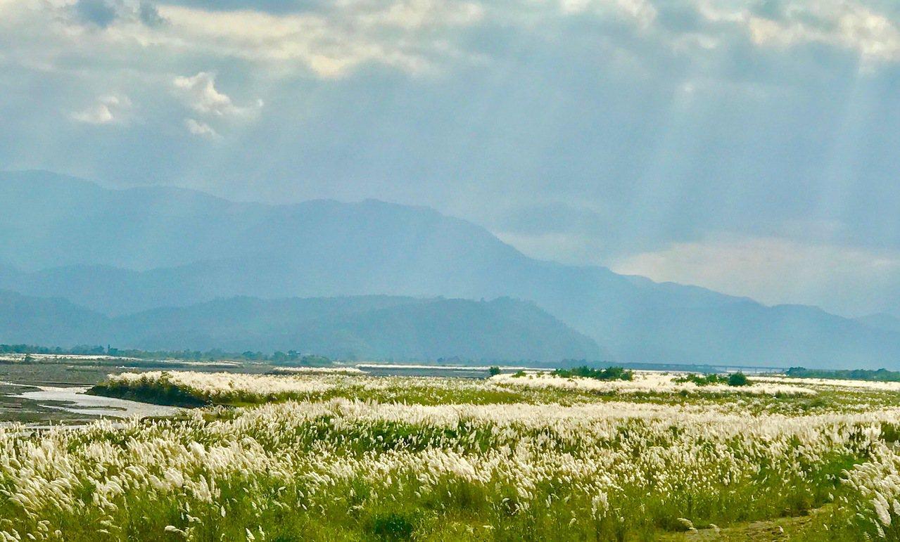 蘭陽溪粗坑再連河段白芒花飄搖,陽光灑下宛如仙境。圖/第一河川局提供