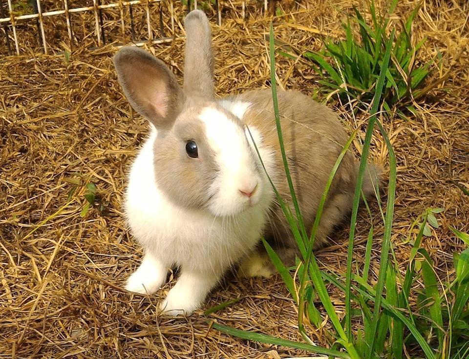 覺得兔子很可愛嗎?事實上牠們也是很有個性的,飼養前,你真的足夠了解牠嗎?  圖片...