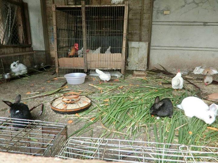 雞兔同籠很溫馨?可愛動物區你所不知道的殘酷環境與假象。 圖片來源:台灣流浪兔保護...