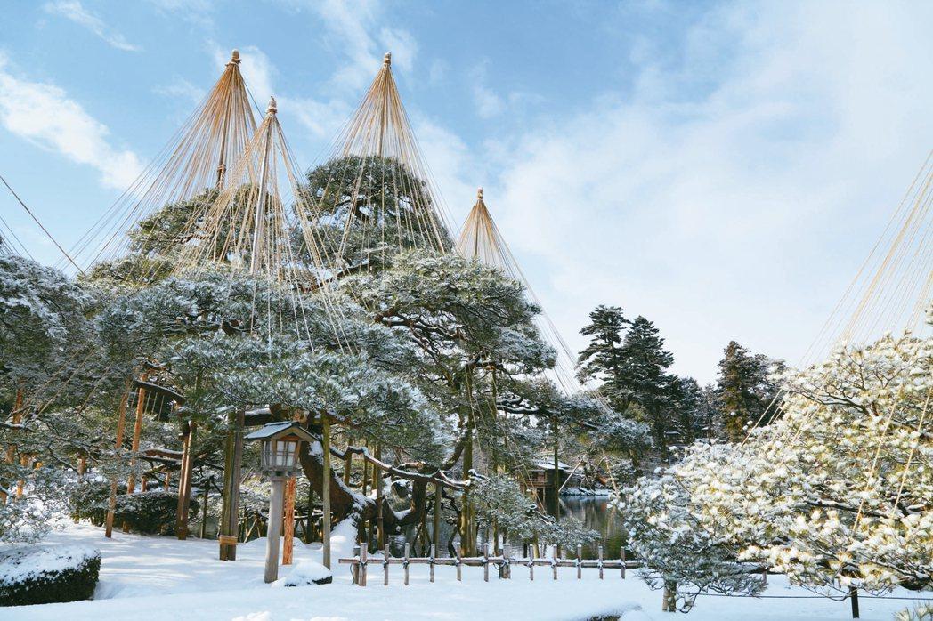 日本三大名景之一的兼六園雪吊奇景。 圖/有行旅提供