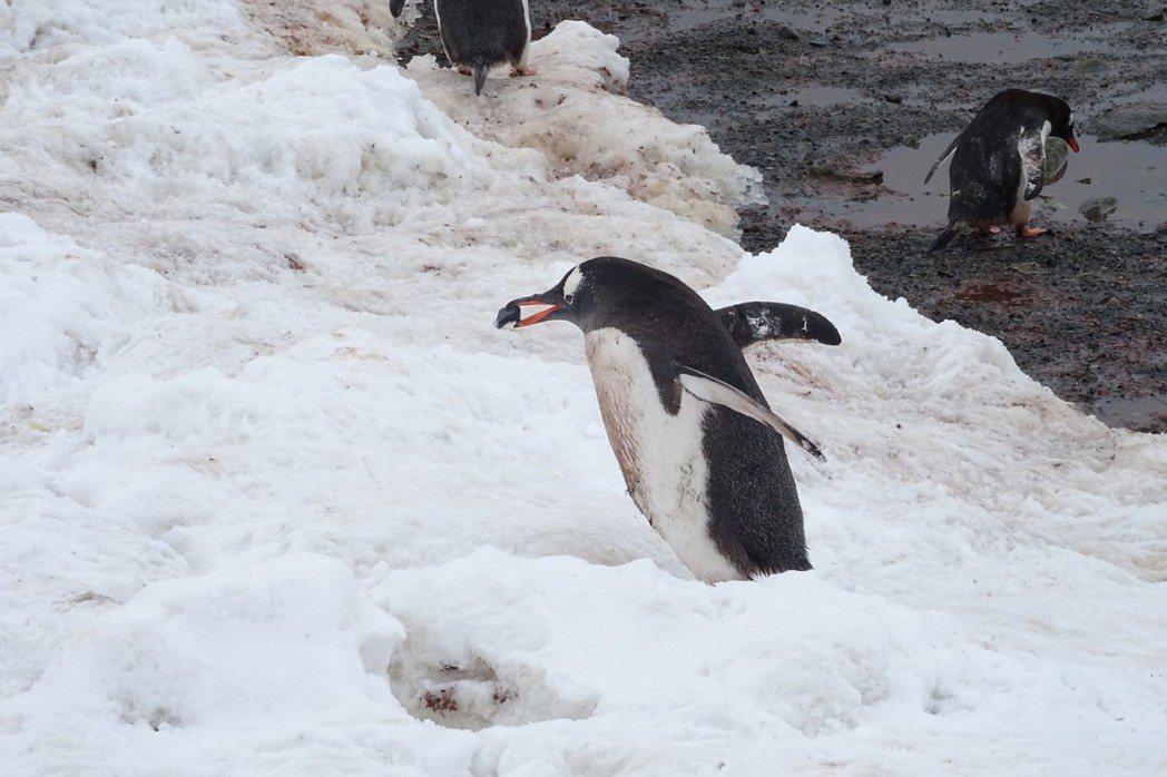南極半島奇航 探險冰封大陸