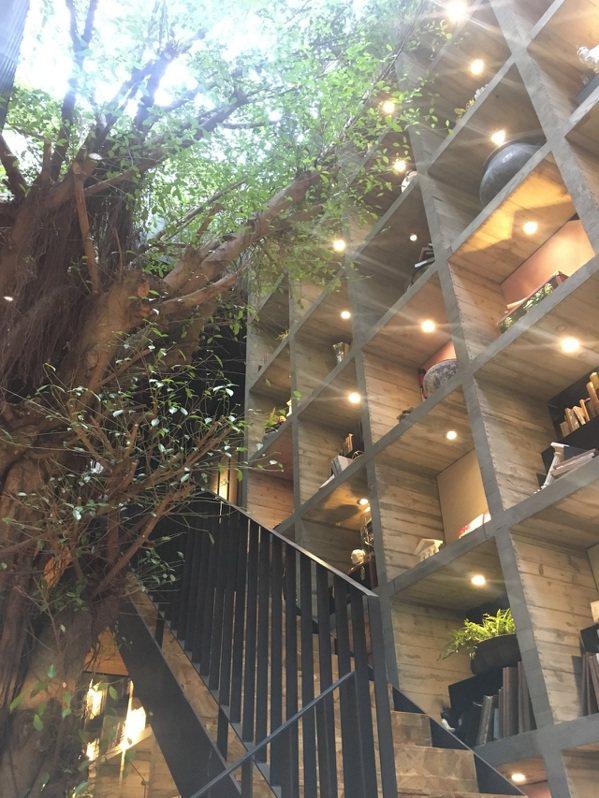 樂樂書屋的鎮店老樹,凸破屋頂限制,展現生命力。 圖/樂樂書屋提供