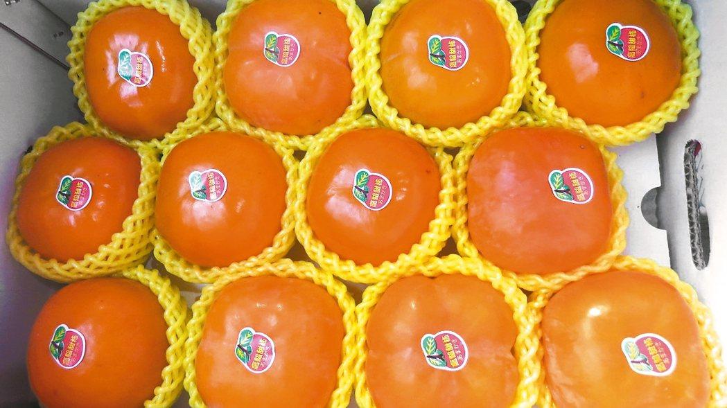 苗栗縣泰安鄉的甜柿,果實甜度高、脆度足。 記者范榮達/攝影