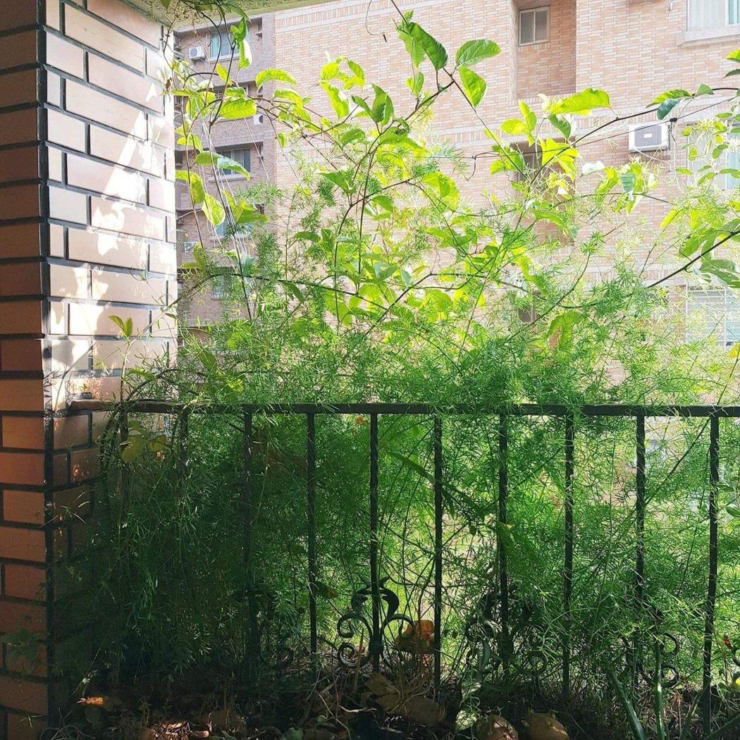 大廈陽台上種滿遮陽植栽,除了美化也可遮陽降溫。 圖/黃其君提供