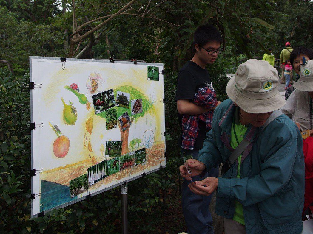 植物園導覽課程讓民眾認識食物森林的不同層次。 圖/林試所提供