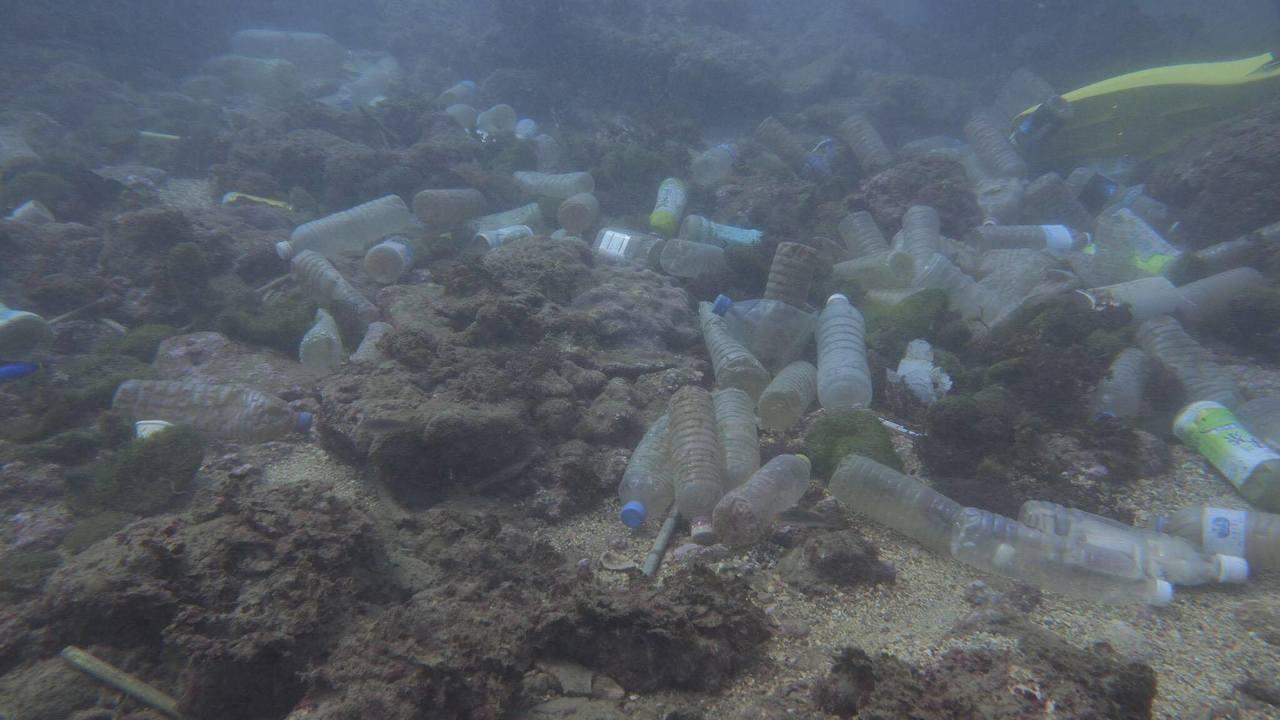 今年夏天有潛水志工,在和平島海域拍到寶特瓶海。圖/陳信助提供