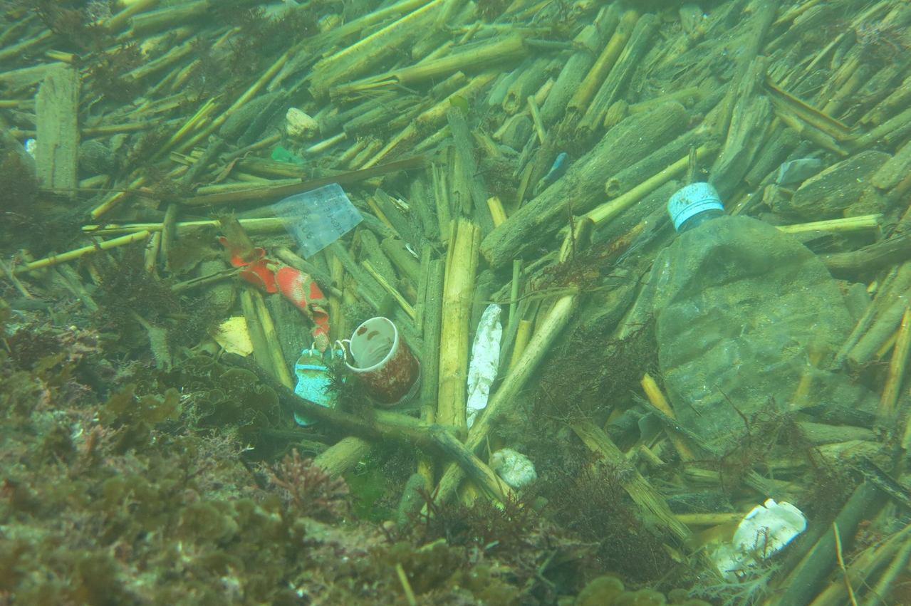 今年夏天有潛水志工,在和平島海域拍到寶特瓶海,還有各種垃圾。圖/陳信助提供