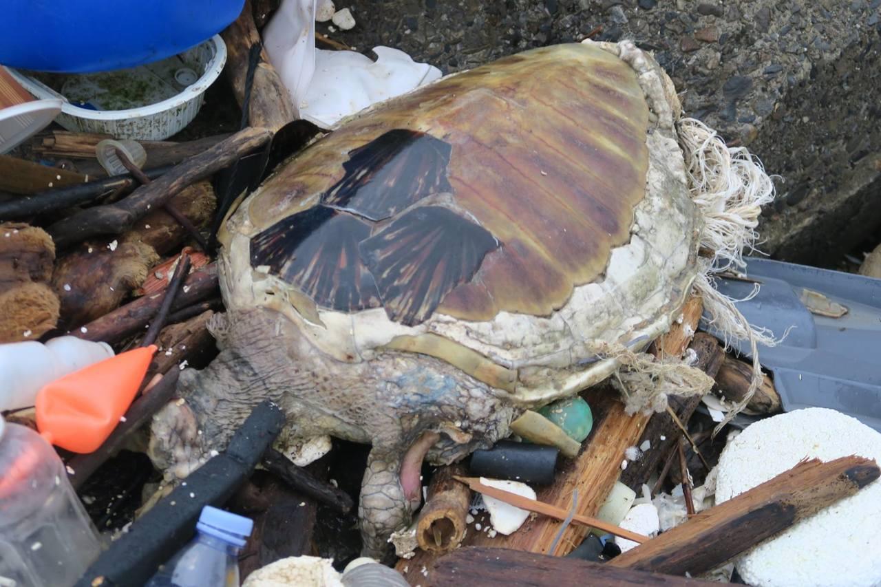 今年夏天有潛水志工,在和平島海域拍到寶特瓶海,還有各種垃圾,這些都會造成海龜誤食...
