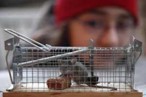 賴亦德/殺生的日常:人道滅鼠該怎麼做?