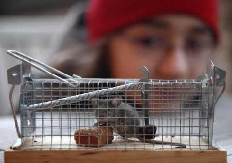 殺生的日常:人道滅鼠該怎麼做?