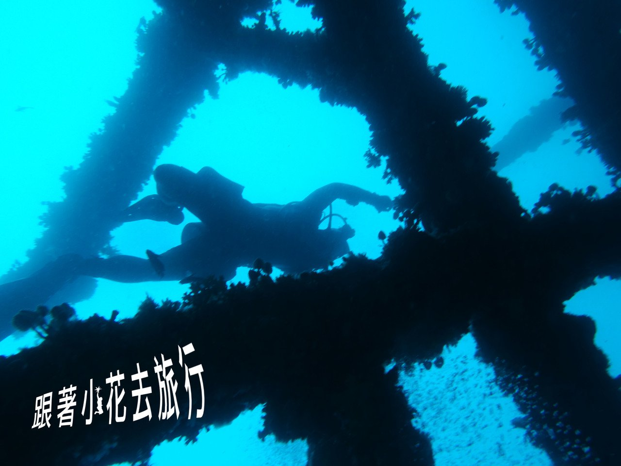 菲律賓的水下精彩多樣 攝影:小花。吳成夫