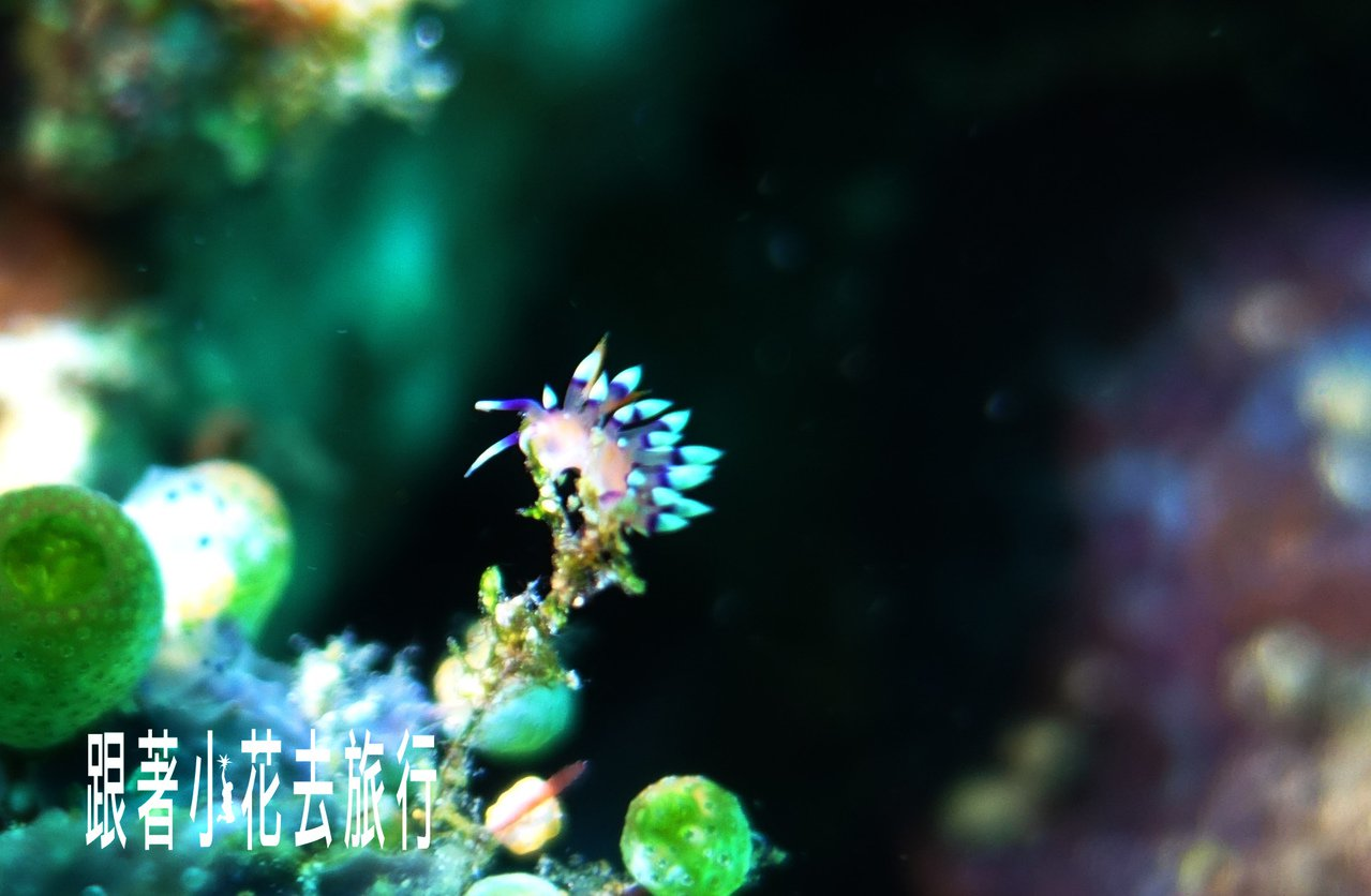 保育有成的阿尼洛,重現的生機是帶動當地觀光最重要的原因 攝影:小花。吳成夫