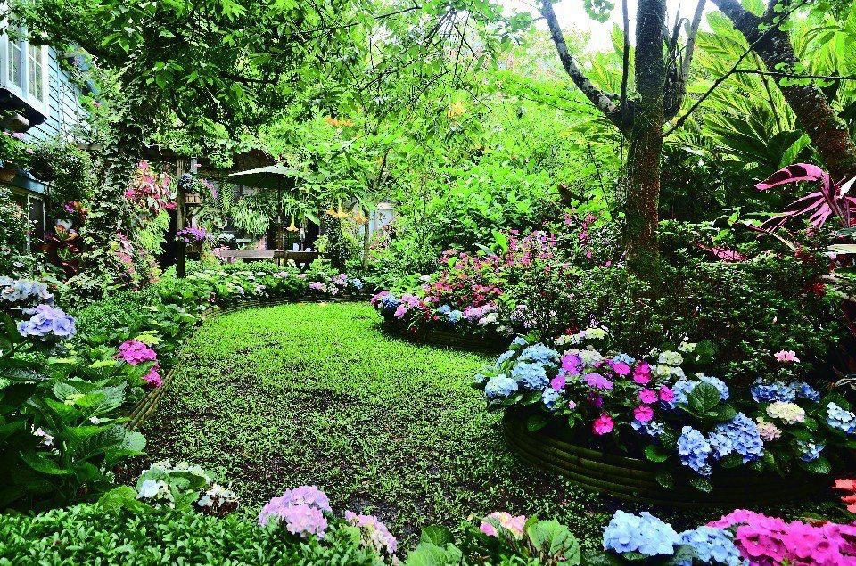 苗栗四季幾乎都可賞花,花期在五月的南庄繡球花,十分豔麗迷人!(圖片提供/欣傳媒)