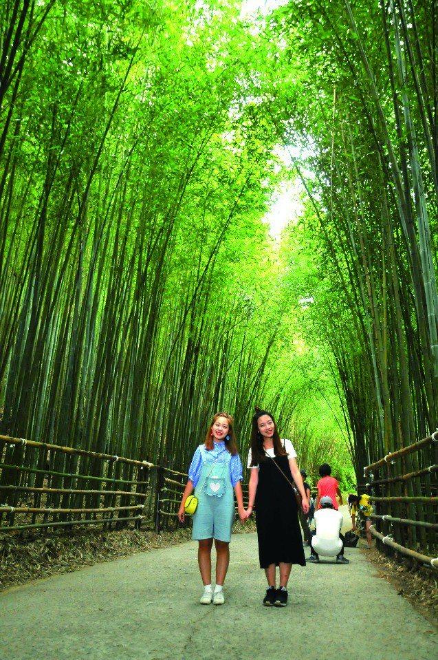 烏嘎彥竹林祕境。(圖片提供/欣傳媒)
