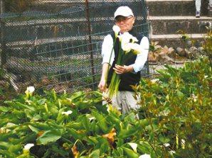 阿元上陽明山採海芋。 賴瑞卿/圖片提供