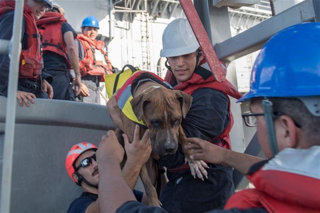 美國夏威夷2名女子和2隻隨行小狗原計畫航行前往大溪地,不料5月惡劣天氣導致船隻引...