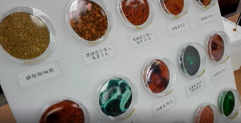 畜產試驗所14日發表台灣首個「雞誘導多能性幹細胞株」研究成果。(photo by...