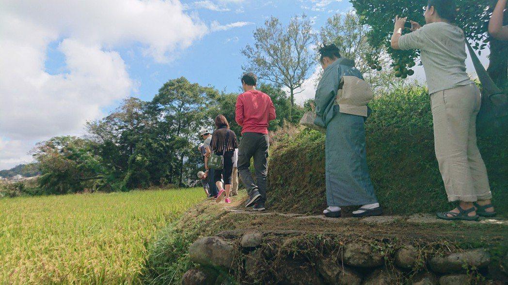 台日農村交流活動今日由新竹縣北埔鄉南埔社區帶領8名日本人一起走在金黃稻田裡,體驗...