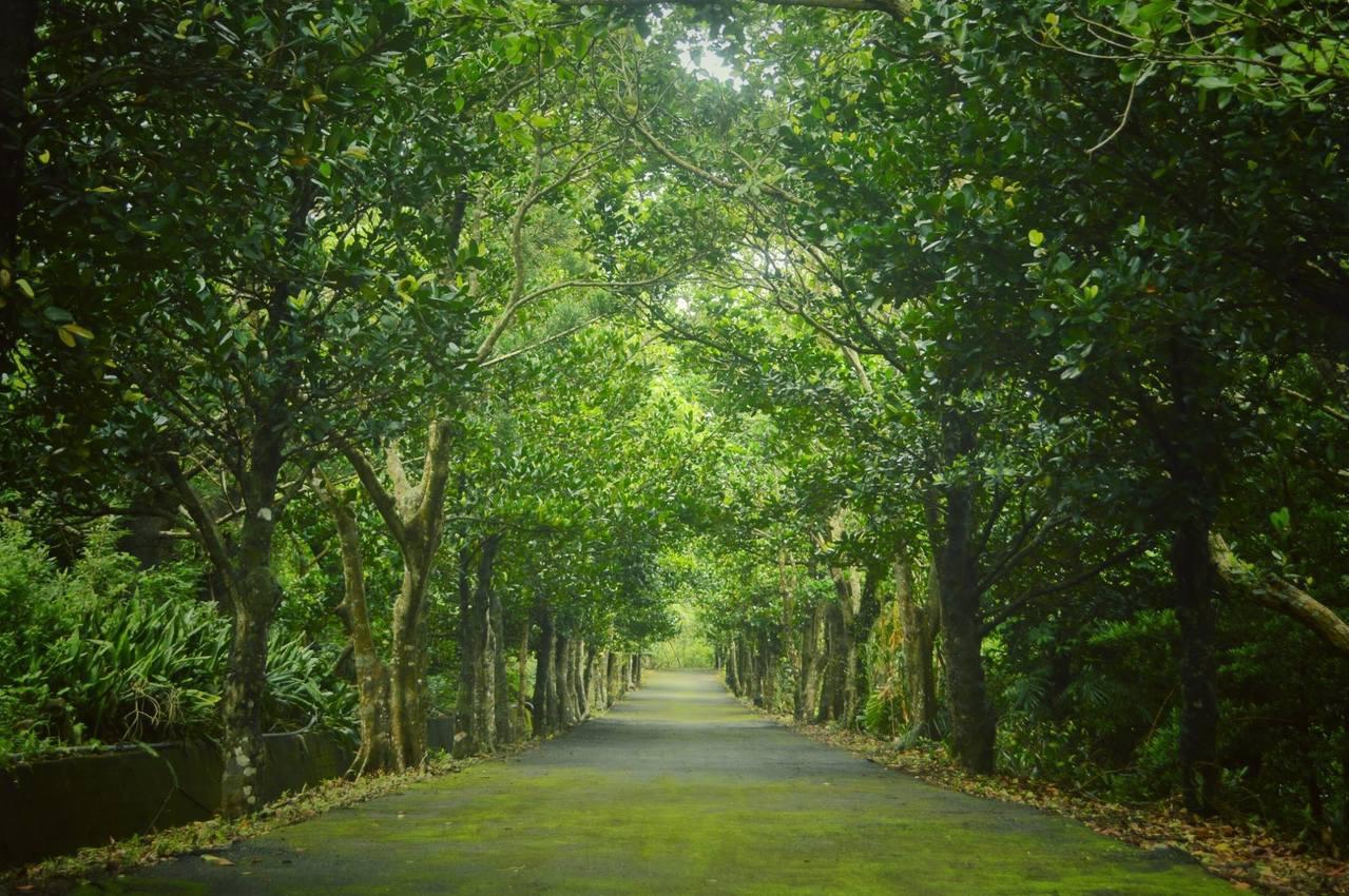 墾管處、林業試驗所合作開發的滿茶古道,大部分位於林試所里德苗圃內,其中有段美麗的...