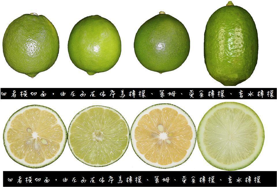 果皮厚厚而且有子的是檸檬,皮薄無子的是萊姆。圖/擷取自農委會臉書