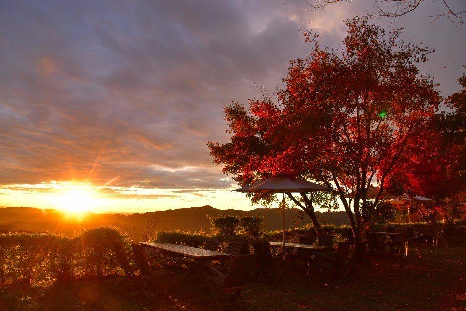 苗栗有不少休閒莊園,是度假好去處。此為楓葉地圖。(圖/欣傳媒)