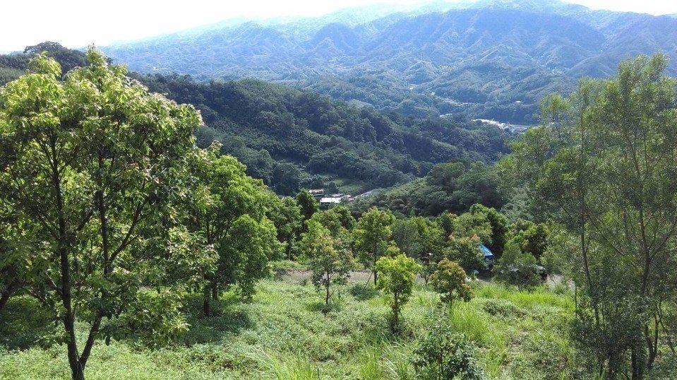 山上種樹牛樟森林莊園。(圖/欣傳媒)