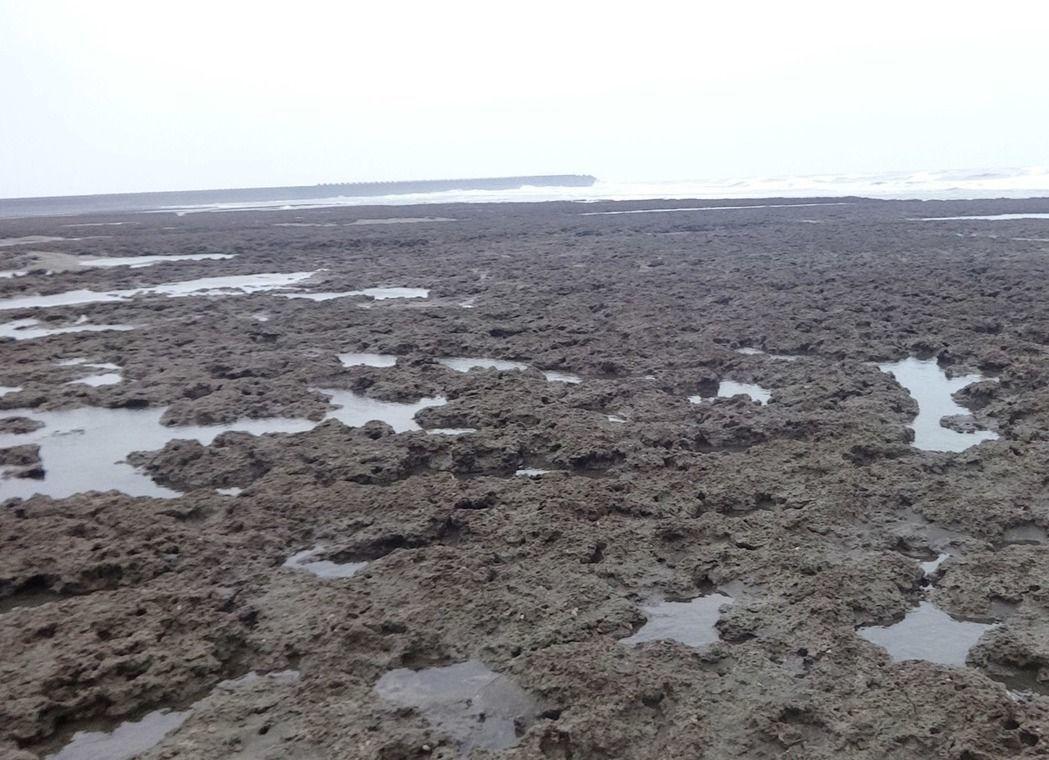 護藻礁,環團籲賴清德守法。圖/本報資料照片