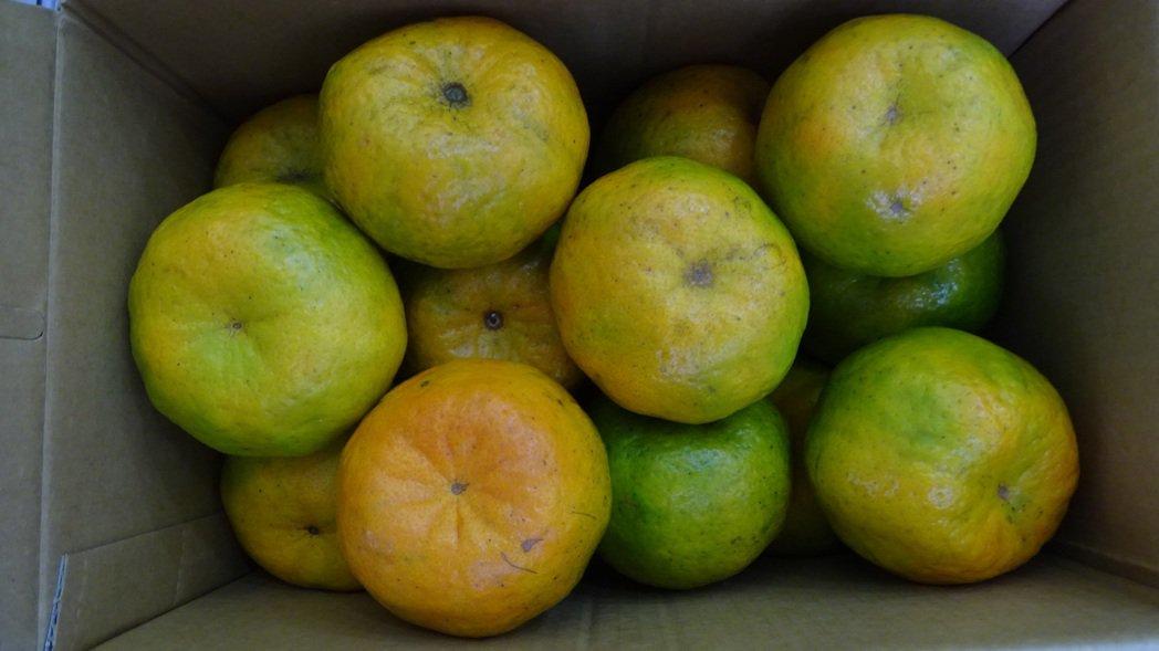 柑橘甜中帶股微酸好滋味。記者謝進盛/攝影