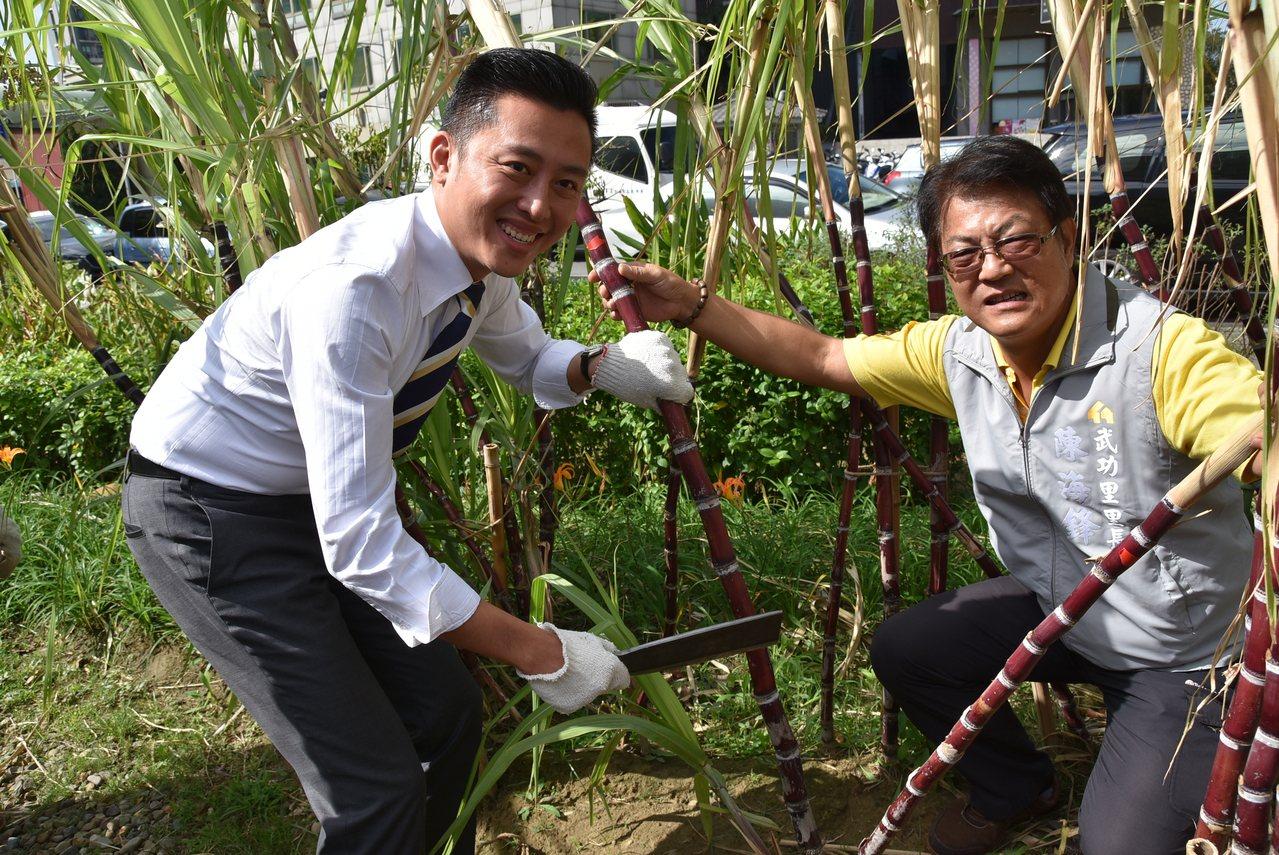 新竹市長林智堅親手採甘蔗,希望大家記得在食物森林中共享的甜蜜時光。記者郭政芬/攝...