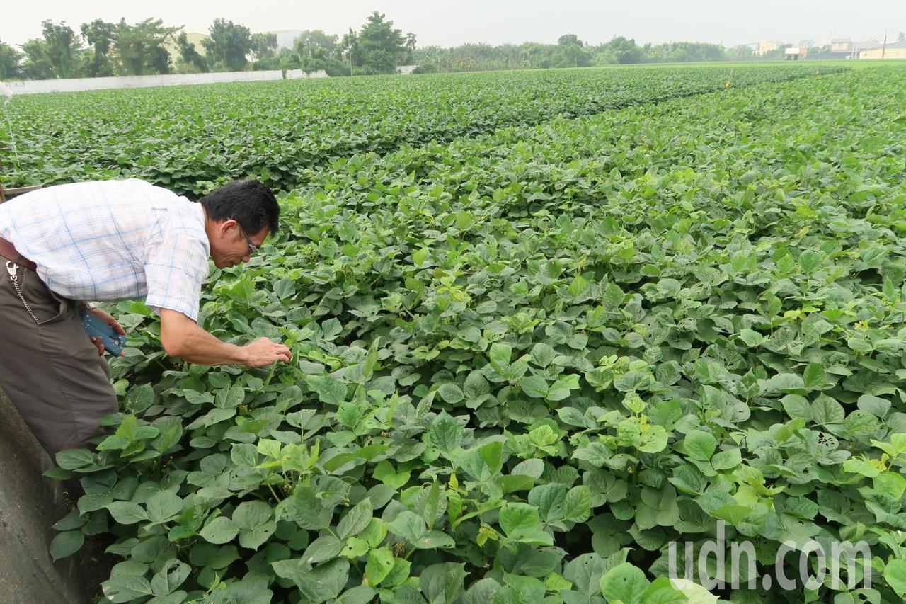 萬丹農會力推友善大地 今年契作紅豆禁用巴拉刈