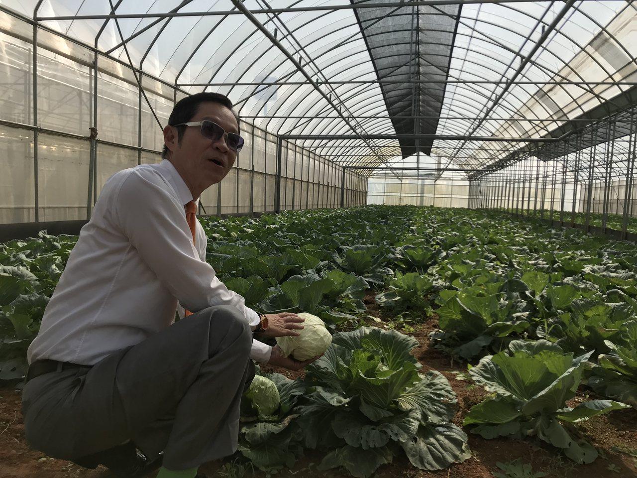 台灣房屋首席總經理彭培業在中壢打造食安園區,種植各類時令疏菜及水果。郭及天/攝影