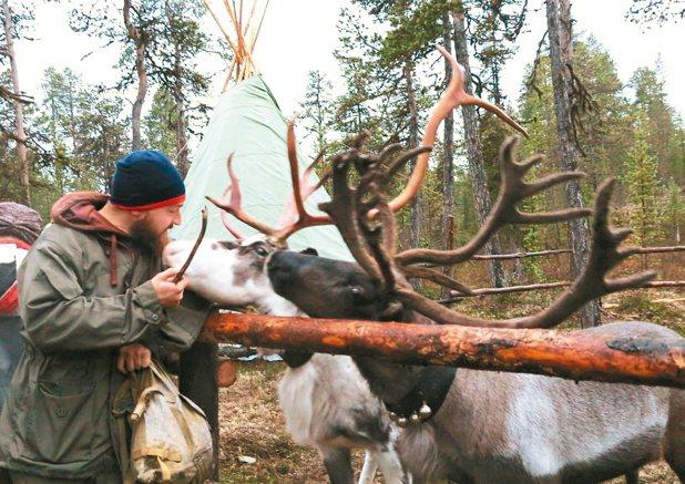 探訪薩米村,觀察薩米人生活,並體驗餵養馴鹿。 陳志光/攝影