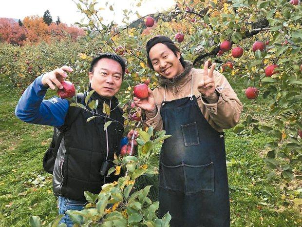 青森蘋果遠近馳名,到果園採摘蘋果的行程超療癒。 陳志光/攝影